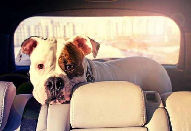 La protección de los perros calientes en los coches: ¿cuál es la ley de su estado?