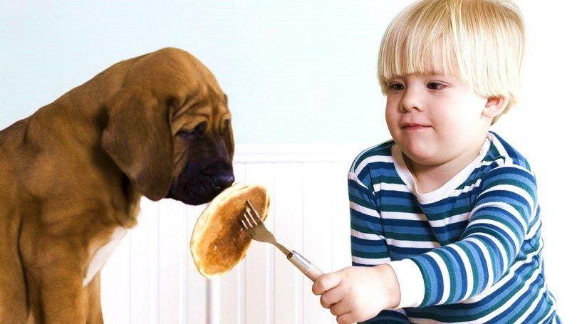 Cachorro parado de comer
