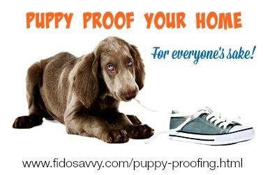 cachorro masticar los zapatos traviesas