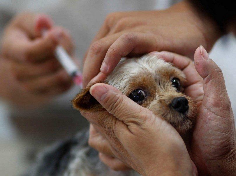 vacunaciГіn canina