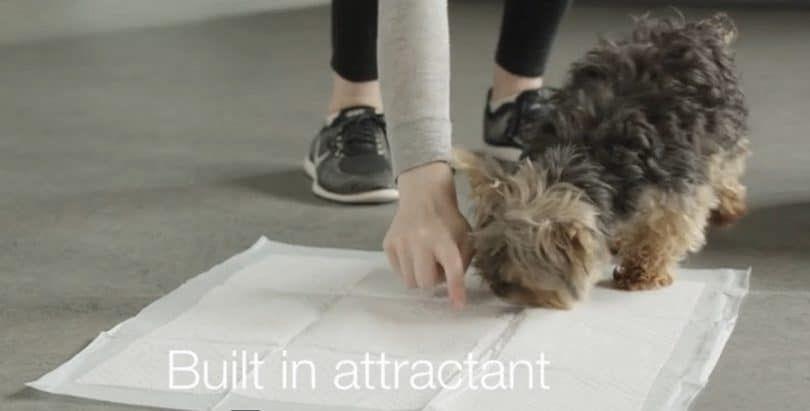 AmazonBasics entrenamiento del animal doméstico y de ratón del perrito