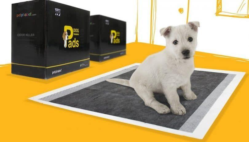Petphabet la mejor tecnología de carbón activado 23 por 24 pulgadas de olor Killer Dog almohadillas de entrenamiento