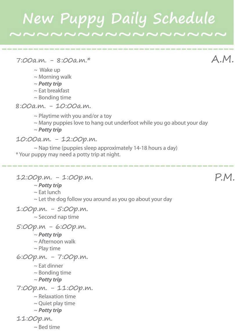 Cachorro horario diario