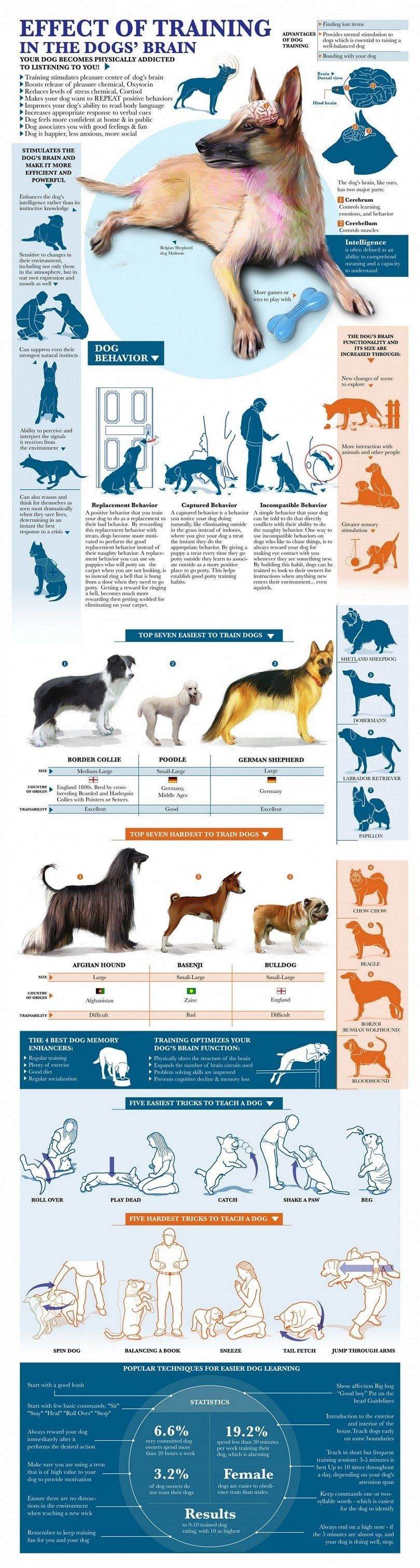 Efecto del entrenamiento en el cerebro del perro