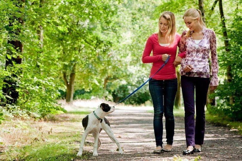 Perro no entrenado en el tiempo para caminar por la pierna