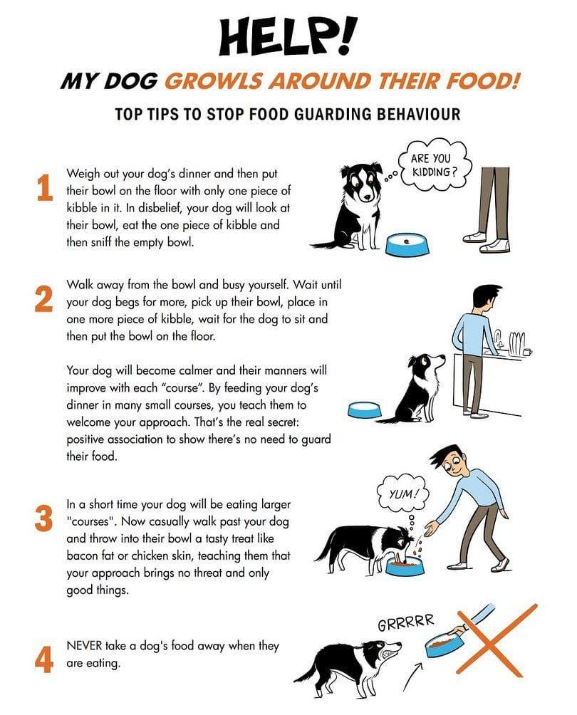 infografГa vigilancia de alimentos