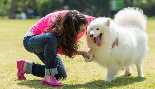 Ponga `er existe: cómo enseñar a un perro a dar la mano