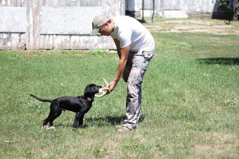 El entrenamiento de un perro para cazar