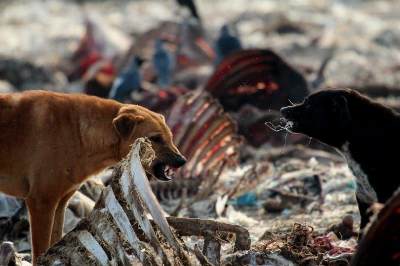 Los perros agresivos