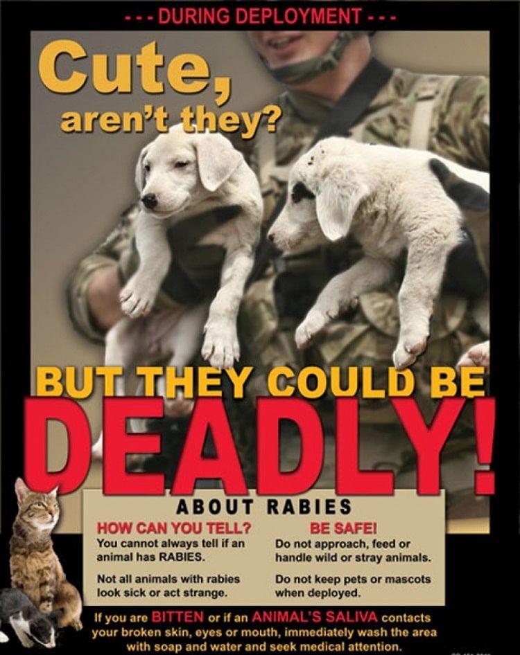 mascotas mortales