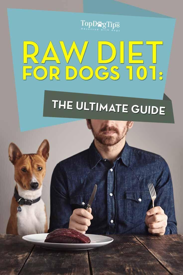 Dieta cruda para los perros 101