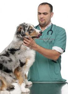 Ciencia en las dietas naturales para perros