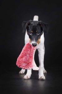 La carne cruda para los perros