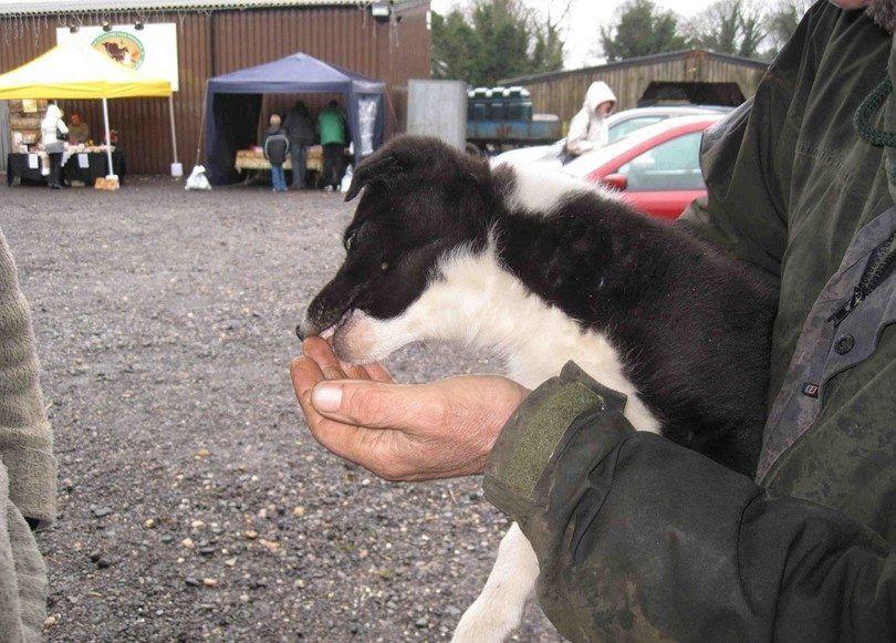 La alimentación y el entrenamiento de su perro