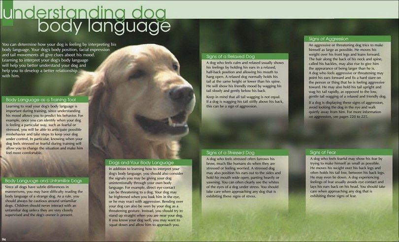 Understaning lenguaje corporal del perro