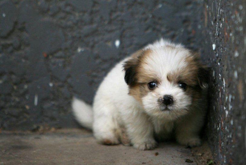 perrito asustado