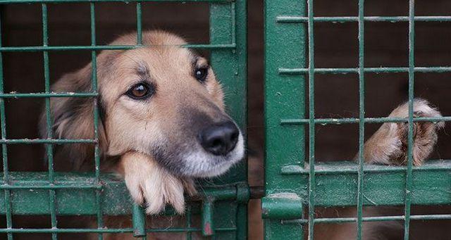 Razones perros terminan en refugios