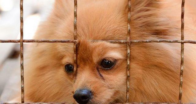 La rehabilitación de un perro fábrica de cachorros