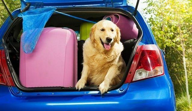 La reubicación de los perros: hacer un lugar extraño menos extraño