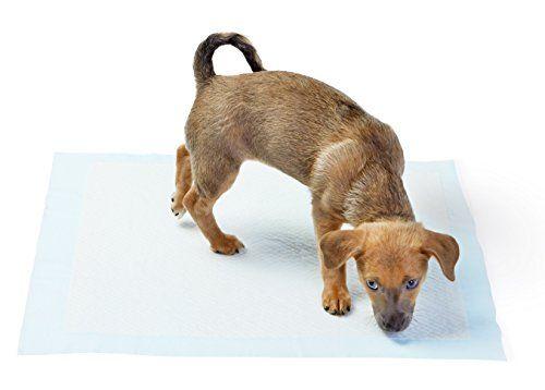 mejores pastillas de esfГnteres cachorro