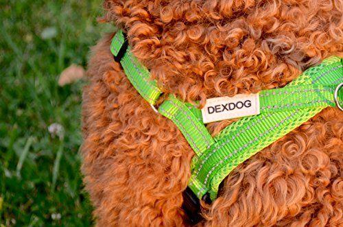 Dex perro EZHarness Comentario