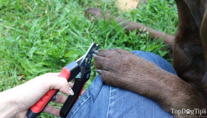 CГіmo cortar el perro`s Nails - Step by Step Guide