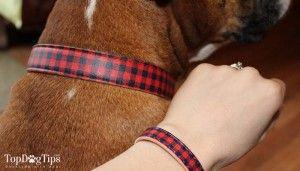 Coincidencia de collar para perros Amistad Comentario