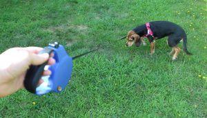 Revisión del correo OLLIN perro retráctil
