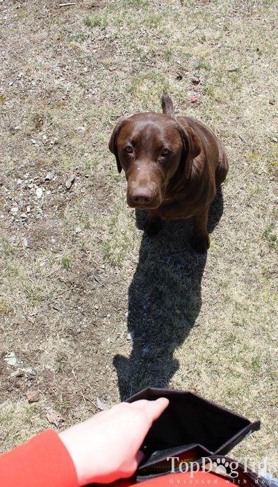Se admiten Savvy Ezy convite del entrenamiento del perro de la bolsa de la opinión