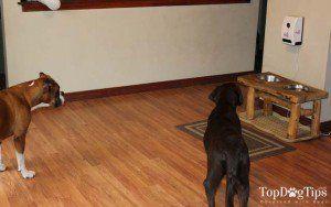 Petzi OpiniГіn - petzi Cam convite para los perros de la opiniГіn