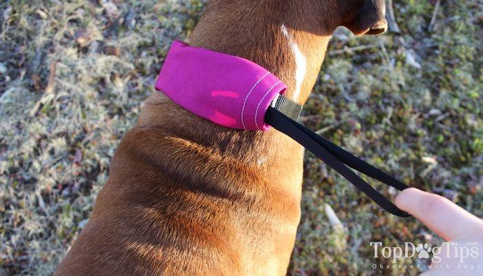 Perro rad Prensa N Run correa para perros de la opinión