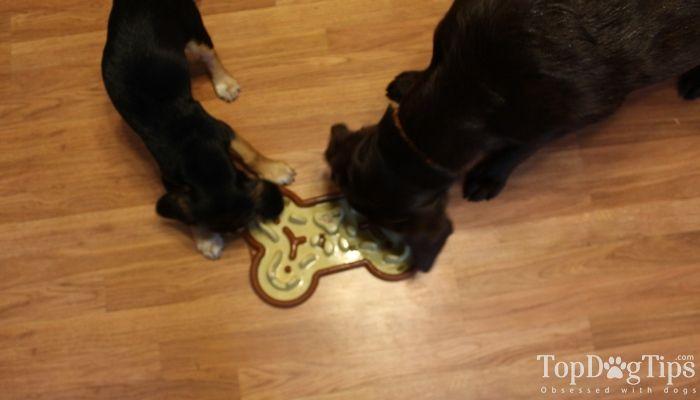 La revisión alimentador Perro lenta Guzzle Bozal
