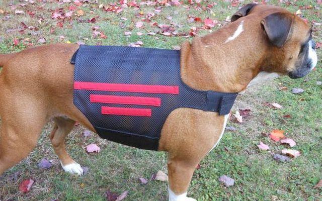 Comentario: Wiggleless apoyo trasero para perros