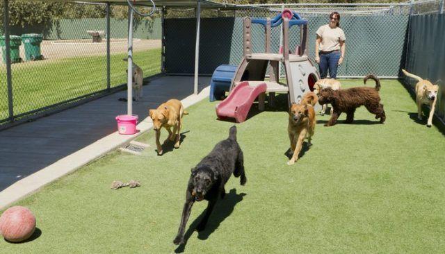 Fuera de control canino se une a sus amigos en Doggy Daycare