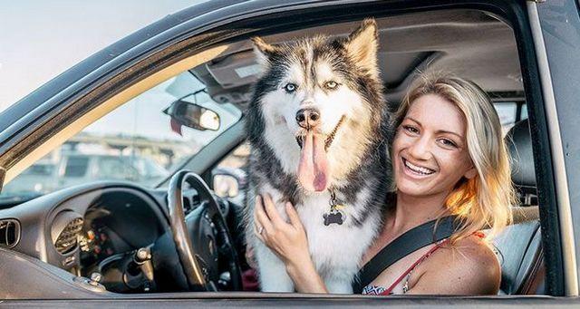 Formas seguras para transportar a su perro en el coche