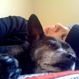 Sarah silverman mensajes que tocan tributo a su perro mayor