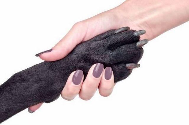 Cero cero: cómo hacer frente a las uñas largas para perros