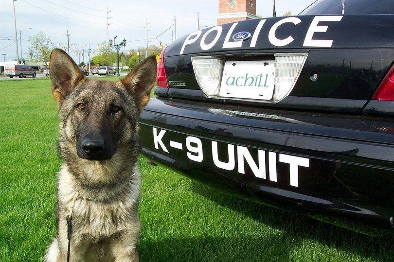 Los perros de servicio secreto K9
