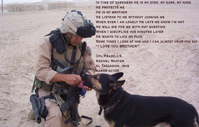 perros protege