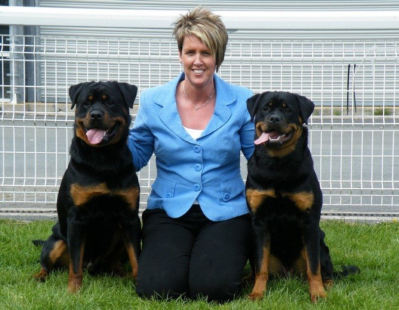 Rottweilers con una mujer