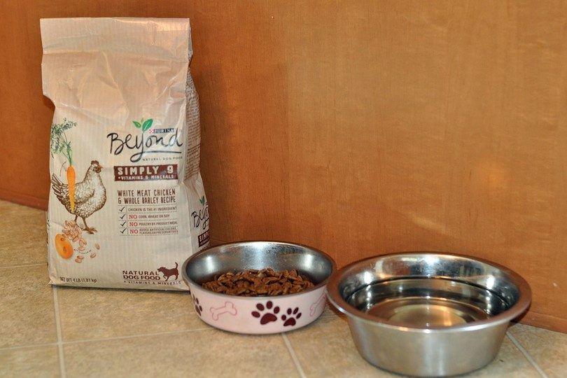 Purina allá de comida para perros