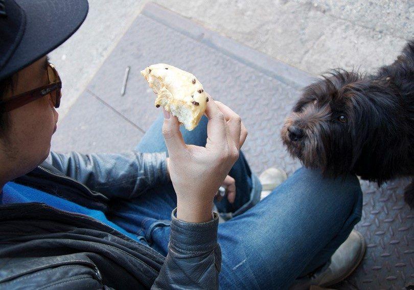 Mala comida para perros