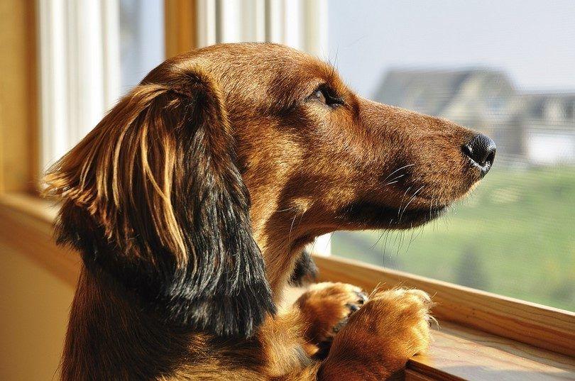 La ansiedad por separación en perros: transformar a su perro asustado en un canino confianza
