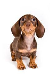 La ansiedad por separación en su perro