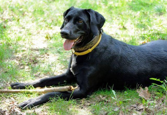 Sargentos, marcas hartz llamados en demanda en contra de la aprobación de la mascota de pulgas y garrapatas collares peligrosas