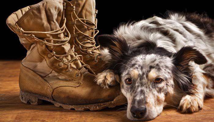 Engranaje del perro del servicio para los perros