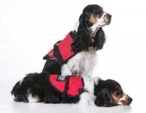 Perros de Servicio chalecos Gear