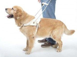 Servicio perro engranaje arnés
