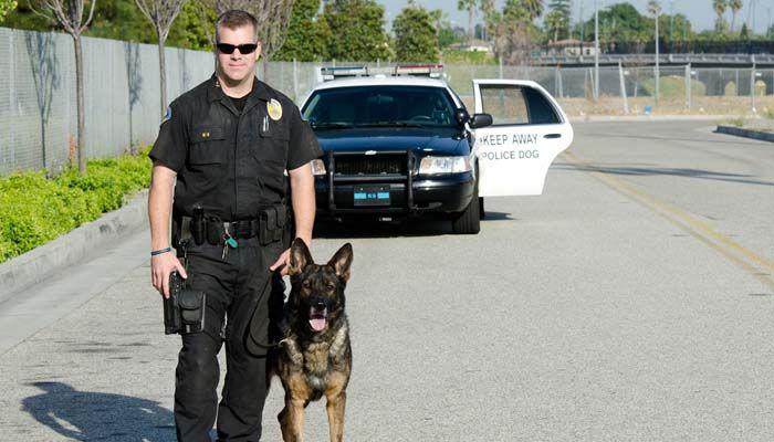Engranaje del perro de servicio para Perros Policía