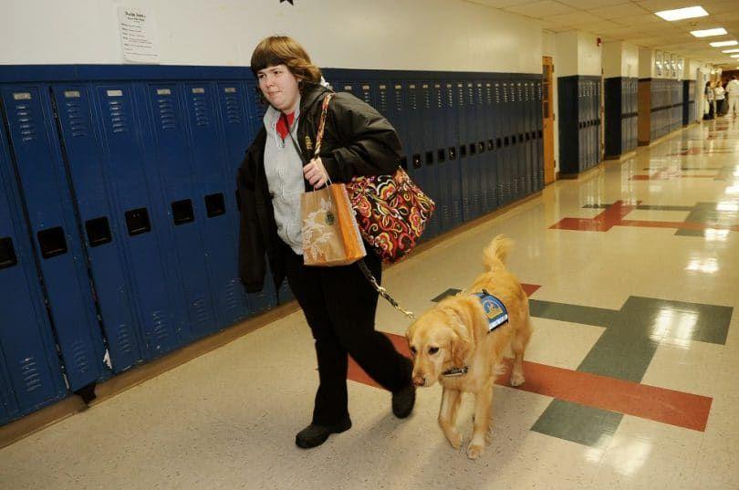 Compañero de Perros y Educación